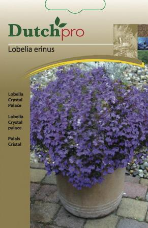 Lobelia